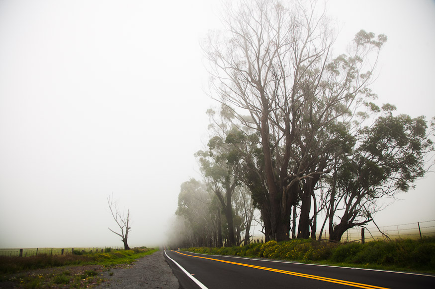 Niebla en Saddle Road
