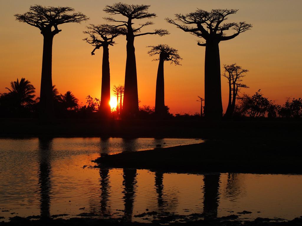 Atardecer en la Avenida de los baobabs