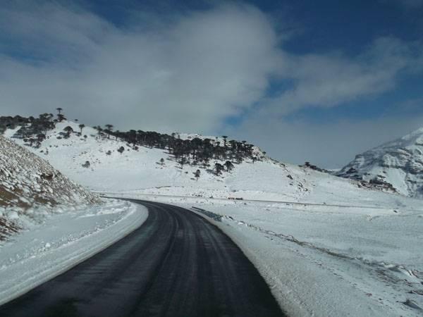 Carretera de Pino Hachado