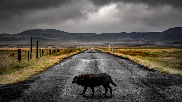 La Ring Road cerca de Egilsstaðir, foto de Bernd Thaller