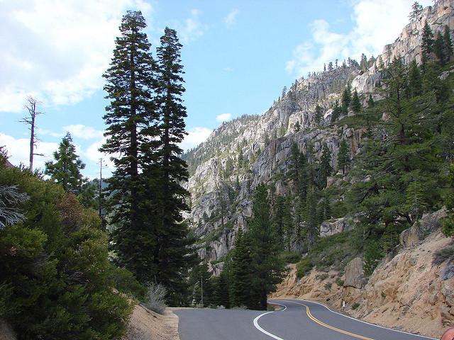 Zona de bosque en el Sonora Pass